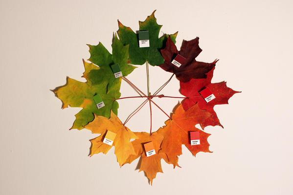 pantone-feuilles-automne2