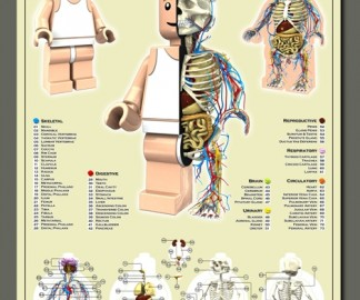 anatomie-lego.jpg