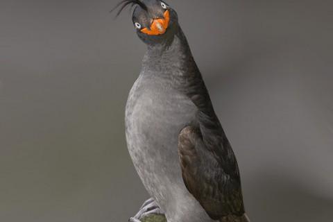 funnybird.jpg