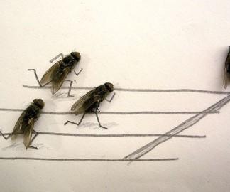 mouche-morte-art-dessin-1.jpg