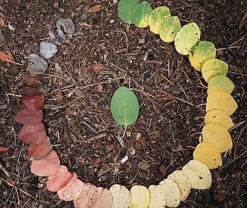 decomposition-automne-feuille.jpg