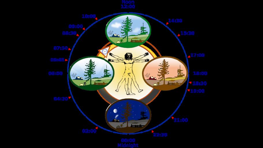horloge-biologique-homme.PNG