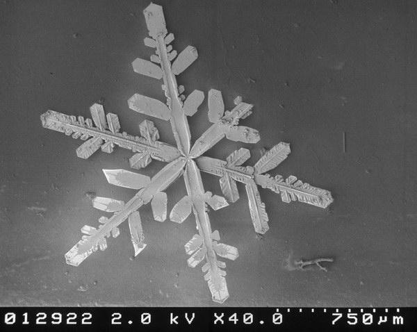 neige microscope flocon 17 De la neige au microscope