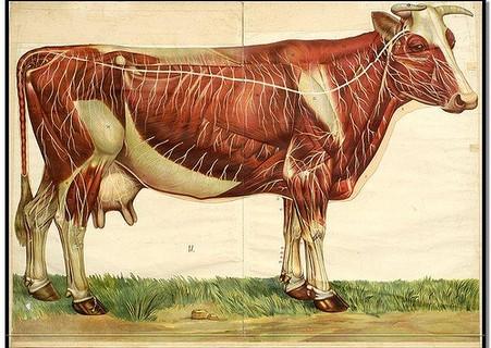 anatomie-animal-1.jpg
