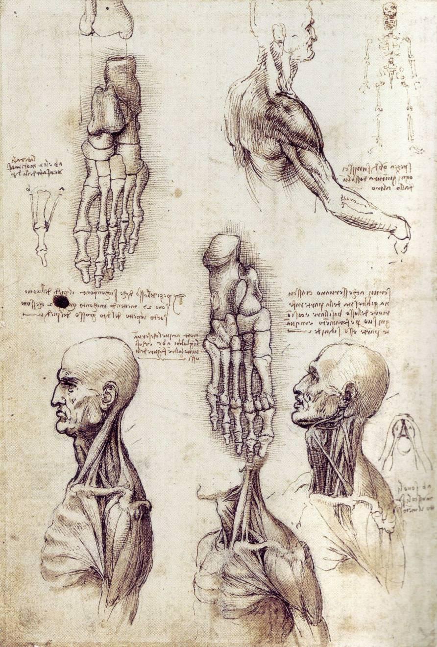 Leonardo da vinci famous anatomy quotes quotesgram - Photo leonard de vinci ...