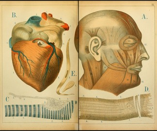 atlas-anatomie-enfant-01.jpg