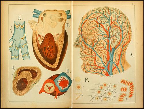 atlas anatomie enfant 02 Atlas anatomique pour écoliers en 1879  information histoire design