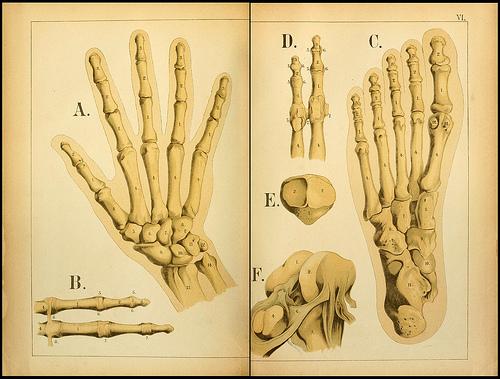 atlas anatomie enfant 04 Atlas anatomique pour écoliers en 1879  information histoire design