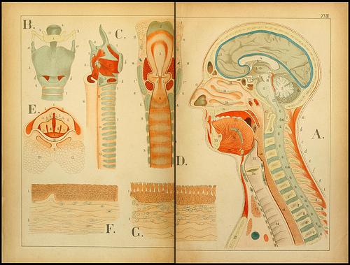 atlas anatomie enfant 11 Atlas anatomique pour écoliers en 1879  information histoire design