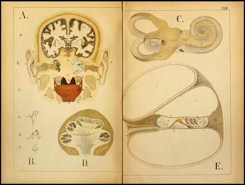 atlas anatomie enfant 13 Atlas anatomique pour écoliers en 1879  information histoire design