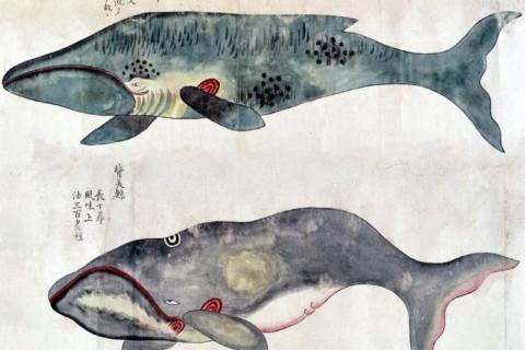 Chasse-Baleine-Japon-02.jpg