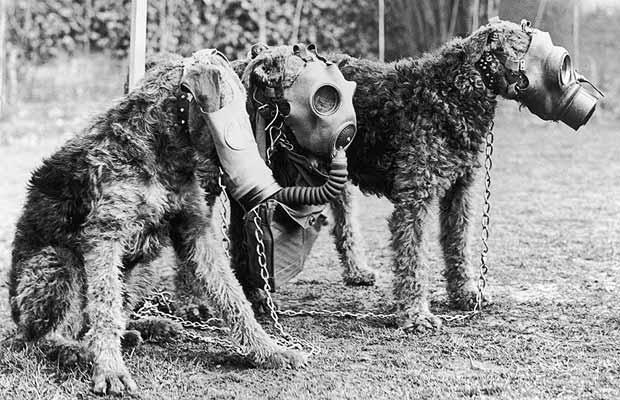 masque-gaz-chien-01.jpg