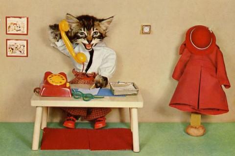 carte-postale-wtf-chat-chien-01
