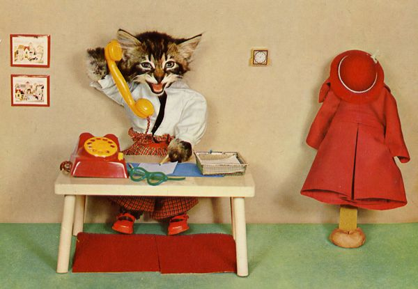 carte postale wtf chat chien 01 Chiens et chats dans des cartes postales insolites
