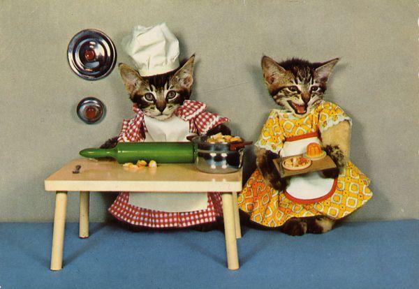 carte postale wtf chat chien 02 Chiens et chats dans des cartes postales insolites