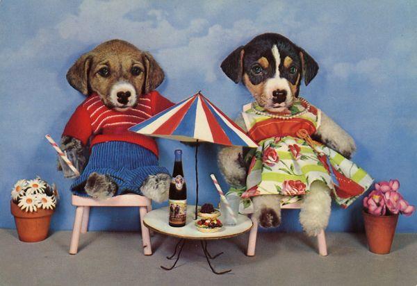 carte postale wtf chat chien 05 Chiens et chats dans des cartes postales insolites