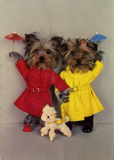 carte postale wtf chat chien 08 Chiens et chats dans des cartes postales insolites