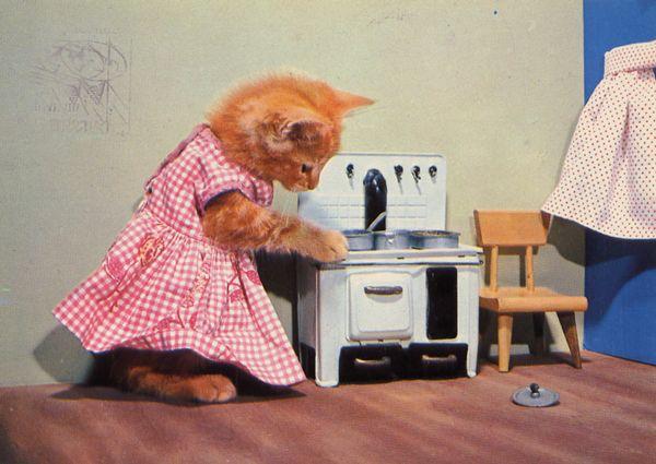 carte postale wtf chat chien 10 Chiens et chats dans des cartes postales insolites