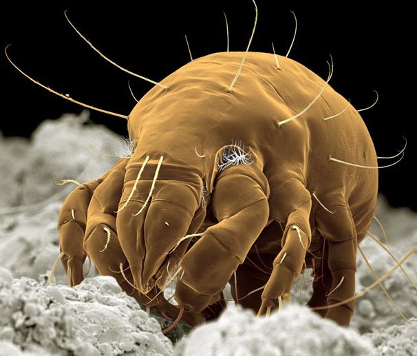 Insectes et d'araignées photographiés avec un microscope