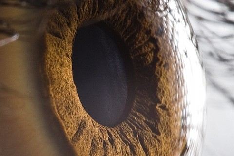 macro-oeil-yeux-01.jpg