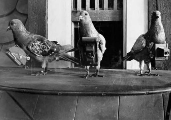 pigeon-camera-photographie-aerienne-01