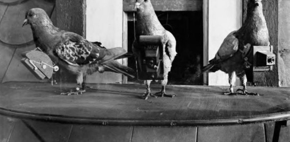 pigeon-camera-photographie-aerienne-01