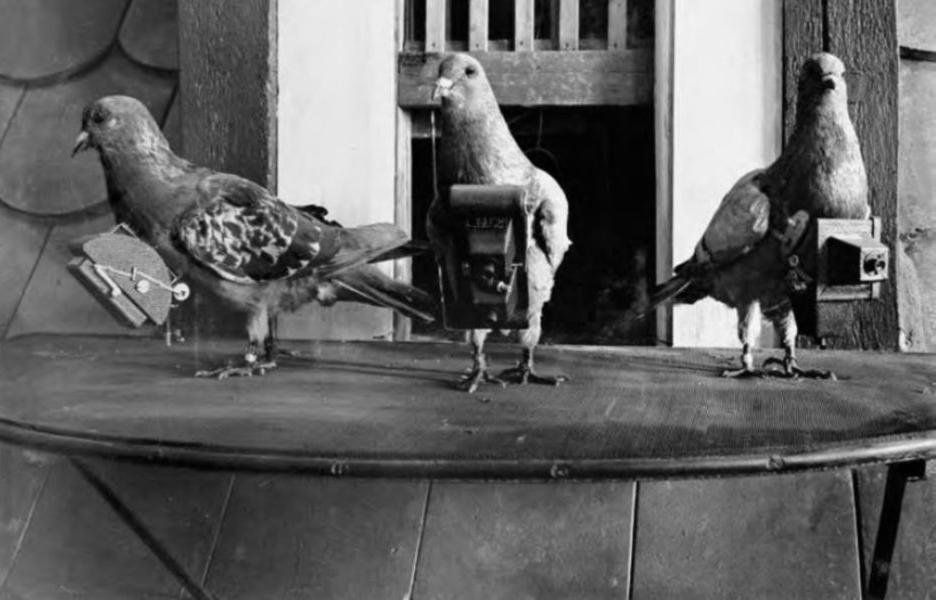 On vas retourner aux pigeons voyageur ... Pigeon-camera-photographie-aerienne-01