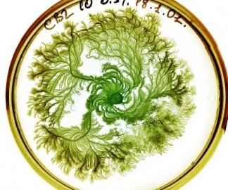 vie-petri-bacterie-jardin-01