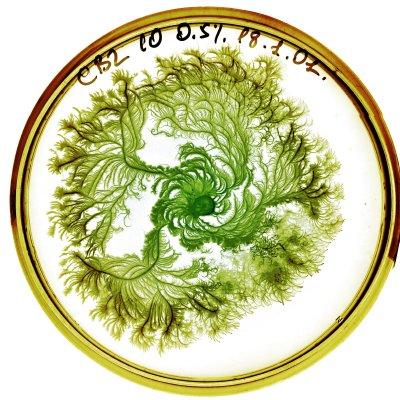 vie petri bacterie jardin 01 De la vie dans le petri  technologie art