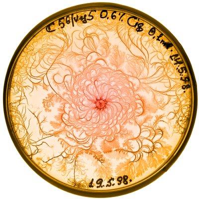 vie petri bacterie jardin 02 De la vie dans le petri  technologie art