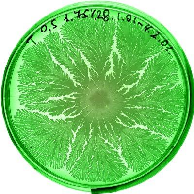 vie petri bacterie jardin 05 De la vie dans le petri  technologie art