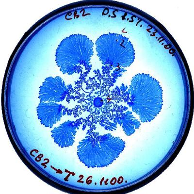 vie petri bacterie jardin 06 De la vie dans le petri