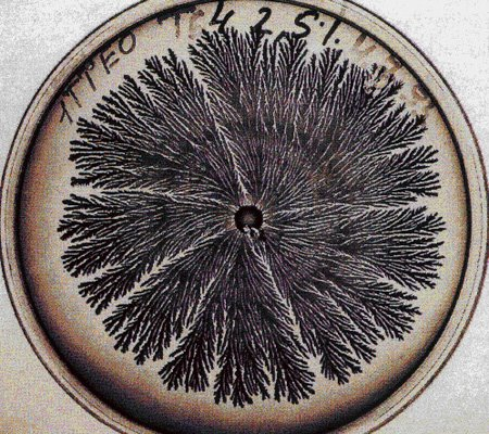 vie petri bacterie jardin 12 De la vie dans le petri