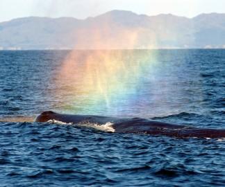 baleine-arcenciel