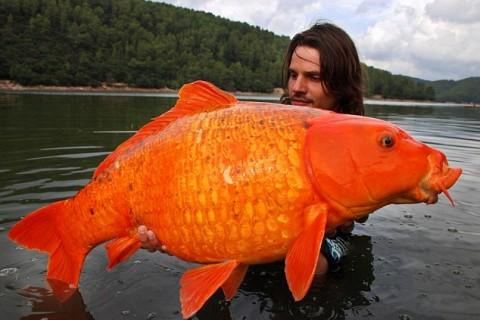 gros-poisson-rouge.jpg