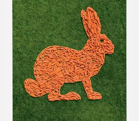 lapin-carotte.jpg
