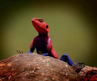 lezard-spidermna.jpg