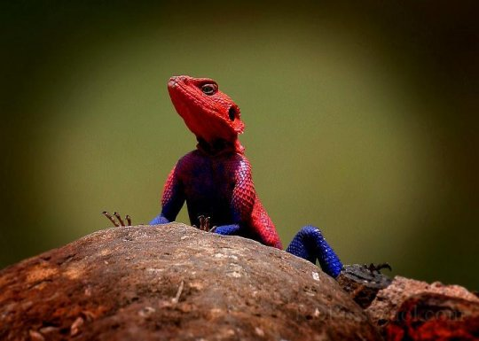 lezard-spidermna.jpg