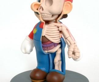 mario-anatomie.jpg
