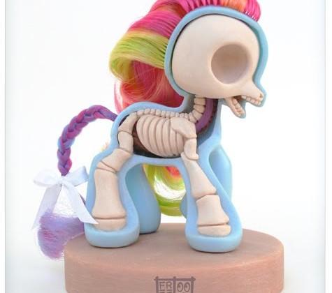petit-poney-anatomie.jpg