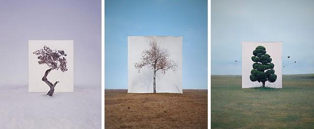 Les arbres de Myoung Ho Lee