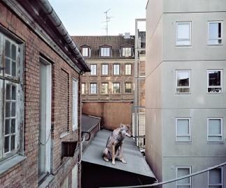 animaux-ville-01.jpg