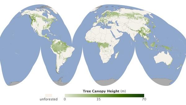 carte-monde-foret-hauteur-arbre.jpg