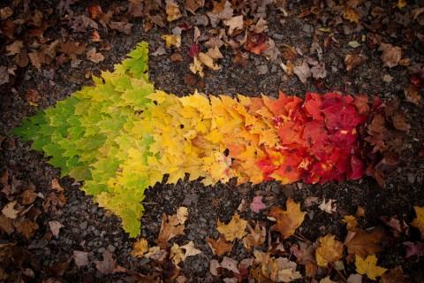 fleche-feuille-automne.jpg