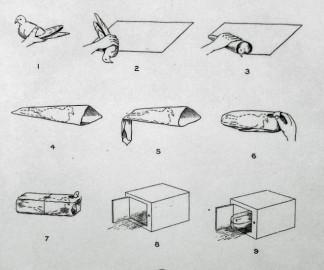 methode-emballer-pigeon-avion.jpg