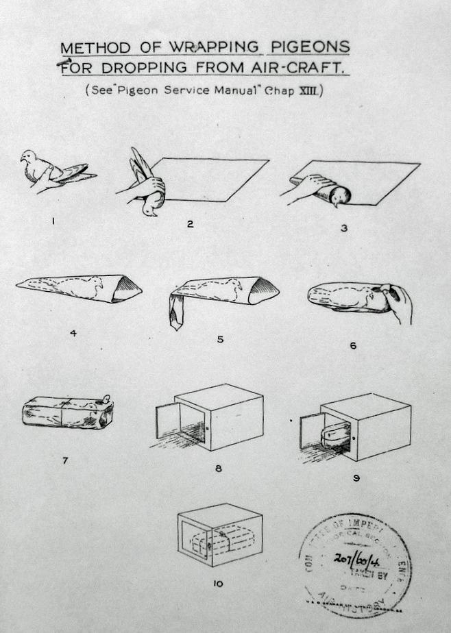 comment emballer un pigeon pour le lancer d u0026 39 un avion