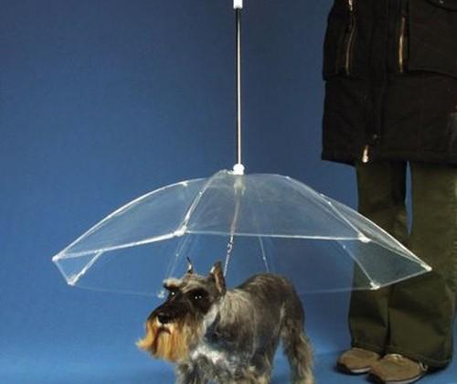 parapluie-chien.jpg