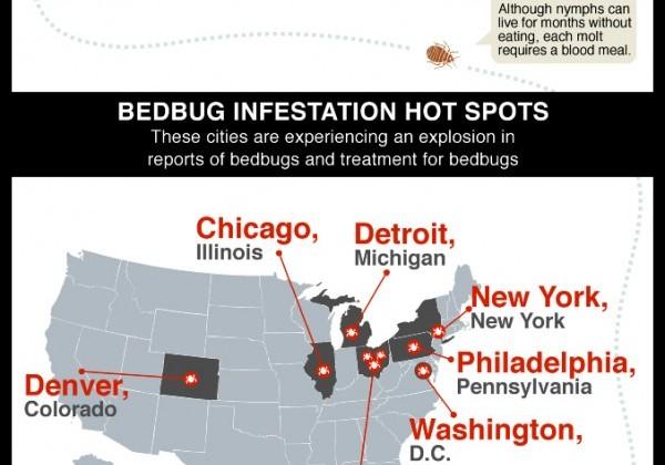 punaise-lit-statistique-bedbug.jpg