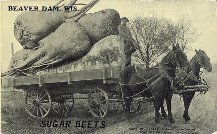 carte postale aliment usa geant09 Cartes postales daliments géants