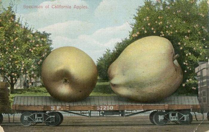 carte postale aliment usa geant14 Cartes postales daliments géants
